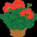 گل و گیاه آپارتمانی