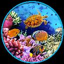 ماهی اکواریوم