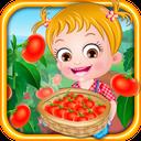کاشت گوجهفرنگی درباغچه هیزل کوچولو