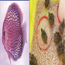 آموزش پرورش جوجه و ماهی آکواریومی
