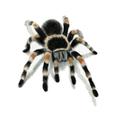 Beat Spider