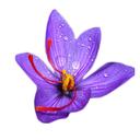 زعفران نوین