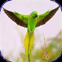 پرندگان