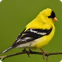 آموزش نگهداری از پرندگان