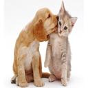 تربیت ونگهداری حیوانات خانگی