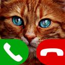 fake call cat game