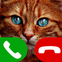 fake call cat game