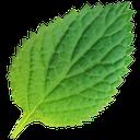 درمان های گیاهی