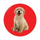 پرورش و نگهداری حیوانات خانگی