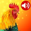 صدای حیوانات و پرندگان(ویژه کودکان)