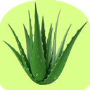All about AloeVera!