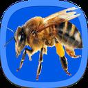 آموزش جامع پرورش زنبور عسل