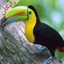صداي پرندگان