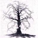 تست شخصیت شناسی نقاشی درختان