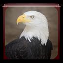 Eagle sound