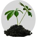 گیاهان شفا بخش