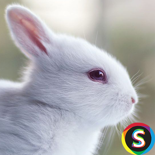 Rabbit Wallpapers For Android Download Cafe Bazaar