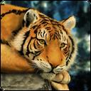 ویدیوهای مستند حیات وحش