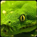 خطرناک ترین حیوانات جهان(ویدیو)