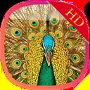 Birds wallpaper