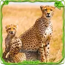 Furious Cheetah Family Simulator