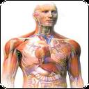 بدن انسان 1