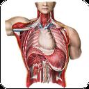 بدن انسان 2