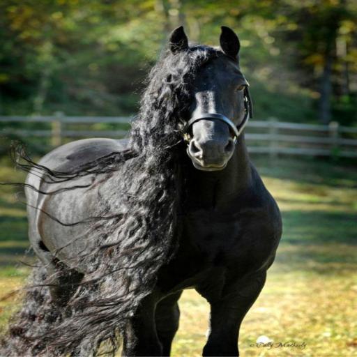 گروه ترکمن در تلگرام پس زمینه اسب - دانلود | نصب برنامه اندروید | کافه بازار