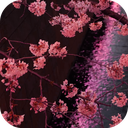 Japanese Sakura Garden Video Wallpapers Gallery