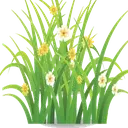 ژورنال گل و گیاه