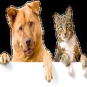 انواع سگ و گربه