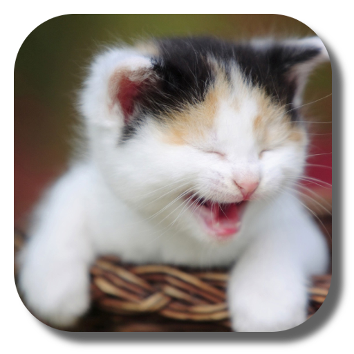 Funny Cat Live Wallpaper For Android Download Cafe Bazaar