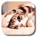 Lazy Cat Live Wallpaper