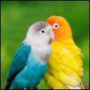 زیبایی پرندگان