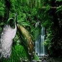 والپیپر زنده طاووس + ویجت ساعت