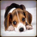 ویدیوهای سگ های بامزه