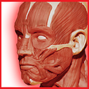 Netter's Atlas Of Anatomy-Head&Neck