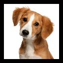 صدای حیوانات ، سرگرمی آموزش کودکان