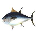 آموزش پرورش ماهی