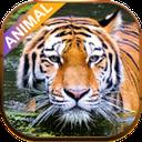 animal snd