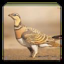 wiki birds