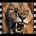 نبرد شیرها