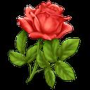 گلخونه - آموزش نگهداری و تکثیر گل