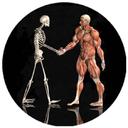 دستگاه اسكلتی عضلانی