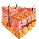 دستگاه پوست