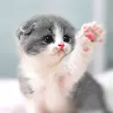 Cat Wallpapers HD, Cute, Gifs,Videos,WaStickers