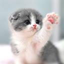Cat Wallpaper HD, Cute, Gifs,Videos,WaStickers