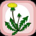 خواص عرقیات گیاهان دارویی سنتی