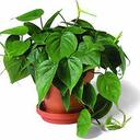 مرجع گیاهان آپارتمانی