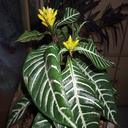 بهترین گیاهان اپارتمانی و باغچه ای